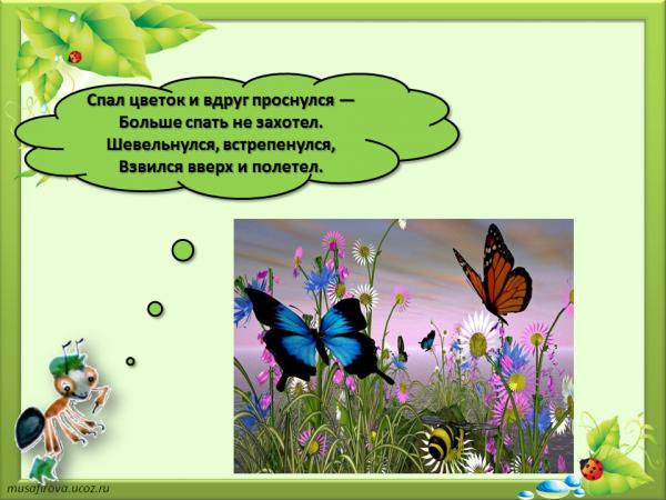 1 класс почему не нужно рвать цветы и ловить бабочек