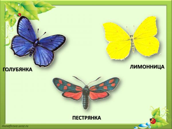 презентация почему не нужно рвать цветы и ловить бабочек 1 класс