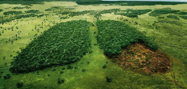 Глобальные экологические проблемы человечества кратко для доклада Любой реферат на эту тему покажет печальную статистику каждый год на планете исчезает 10 миллионов гектаров лесов причем цифры становится все более и
