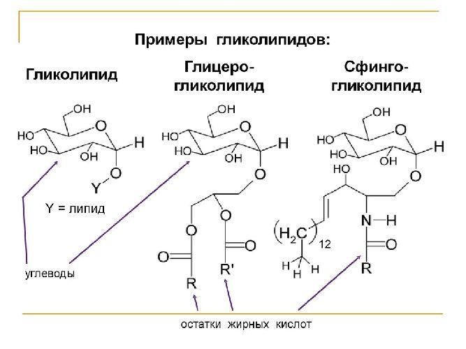 Гликолипиды
