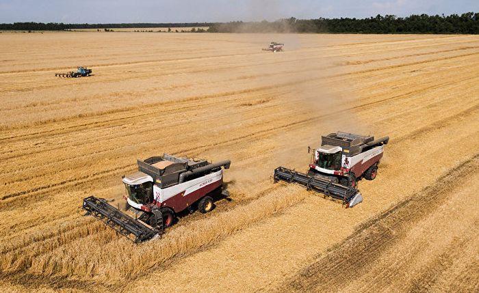 Россия, уборка пшеницы
