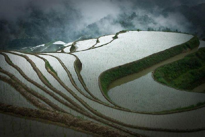 Заливные поля по выращиванию риса в Китае