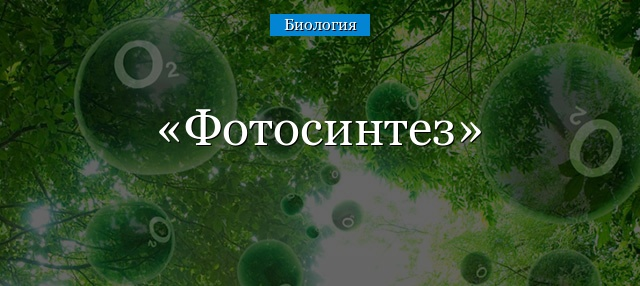 Краткий реферат на тему фотосинтез 3027