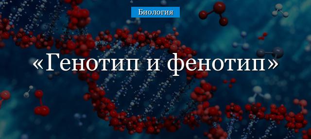 генотипы это