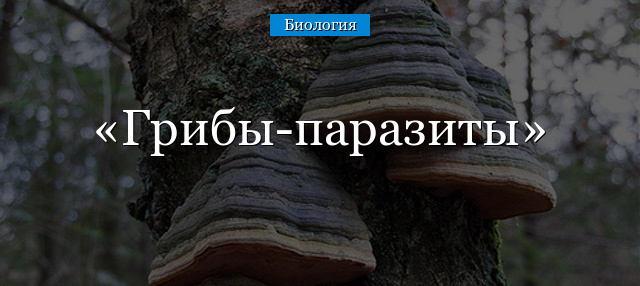 Где обитают грибы паразиты приведите примеры