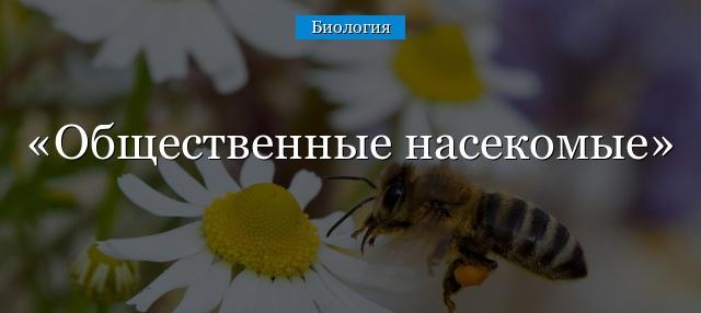 Общественные насекомые муравьи и пчелы
