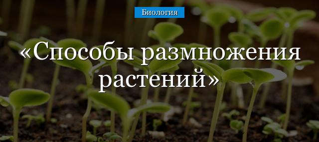 контрольная работа по биологии 7 класс по теме семенные растения