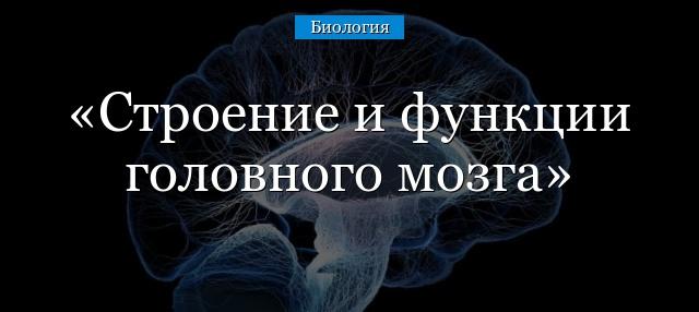 Отделы мозга и их функции: строение, особенности и описание