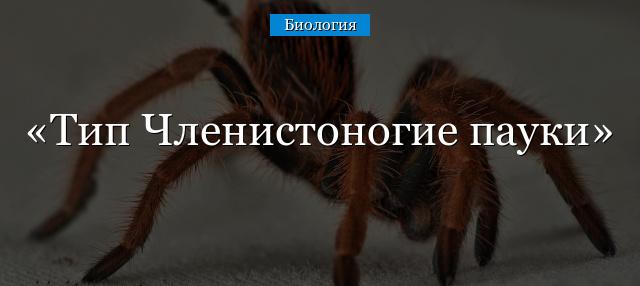 Тип членистоногие пауки – виды паукообразных, класс и что к нему относится