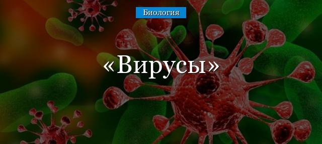 Доклад по биологии про вирусы 7720