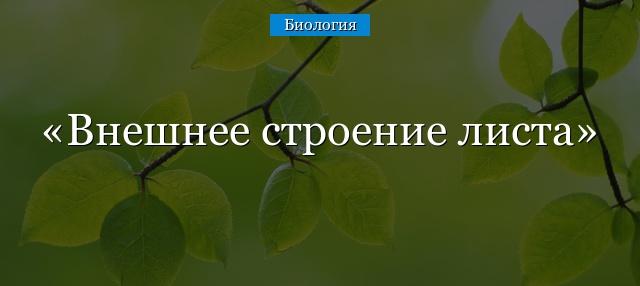 Дуб простые или сложные листья