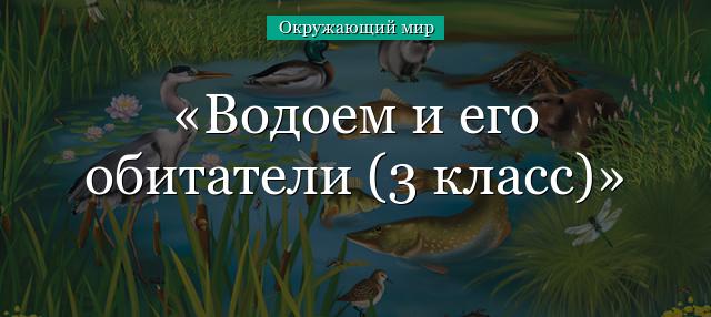 Доклад кто живет в пруду 3431