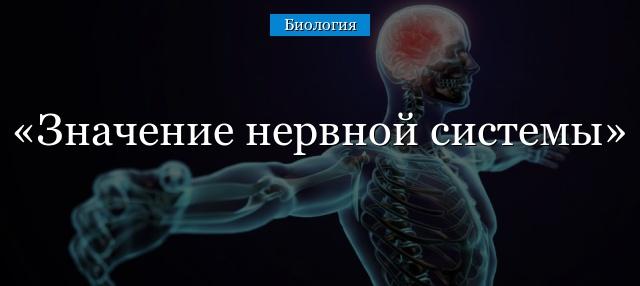 Значение нервной системы для организма доклад 6555