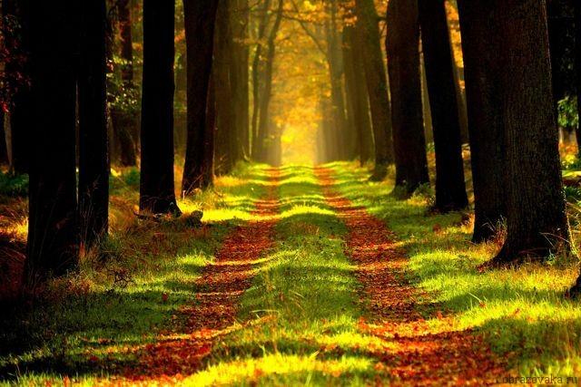 Морфологический разбор «лес»