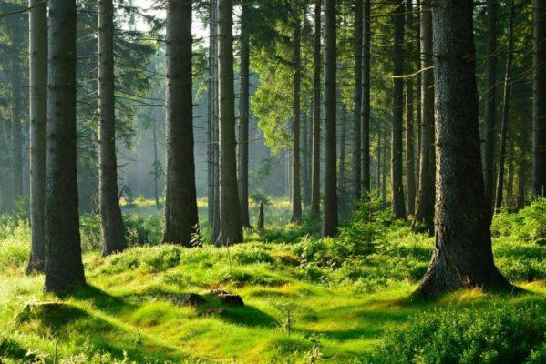 14 съедобных лесных растений- где их найти, фото и описание