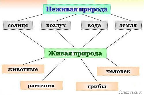 Схема связи объектов живой и неживой природы фото 329