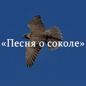Краткое содержание «Песня о соколе»