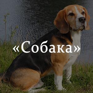 Краткое содержание «Собака»