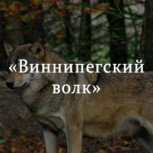 Краткое содержание «Виннипегский волк»